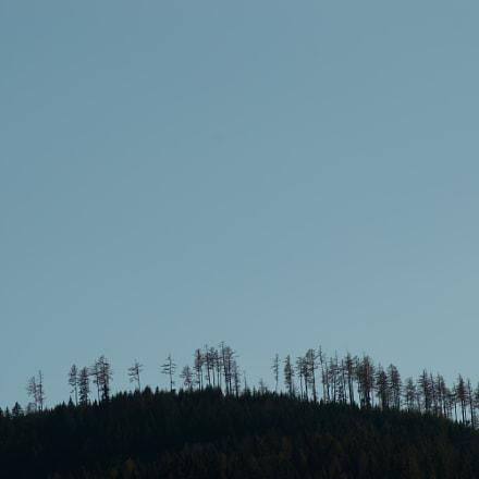 Bäume in der Luft