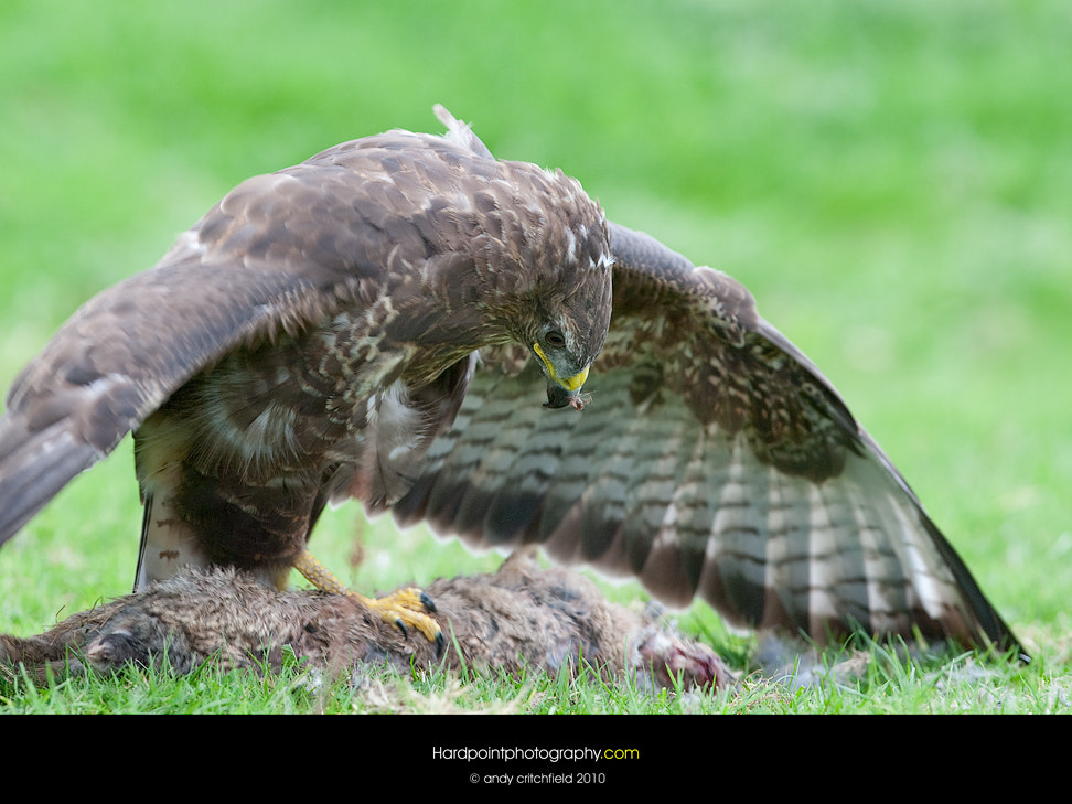 Photograph Dinner Time by Hardpoint Photography on 500px