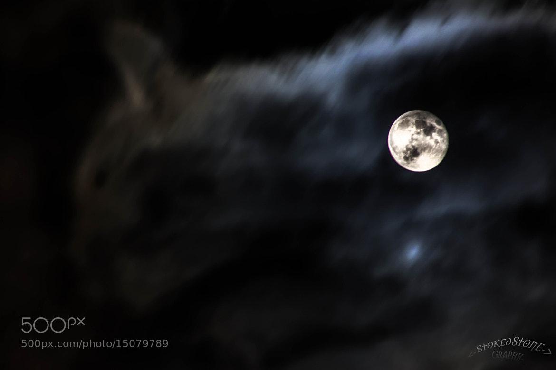 Photograph Mooncat by Ralf Steinbrück  on 500px