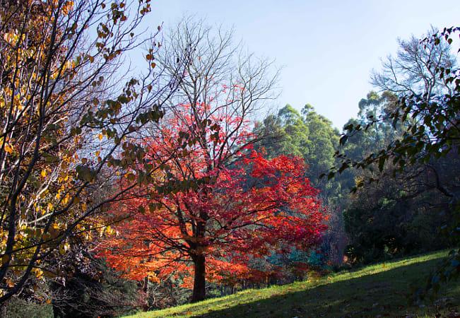 Pirianda gardens Olinda VIC