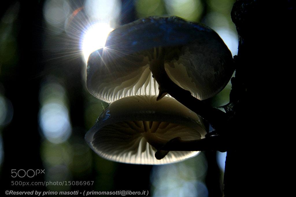 Photograph Parco del Frignano - Pratignano - ( modena italy )_2906 - dvd15 by primo masotti on 500px