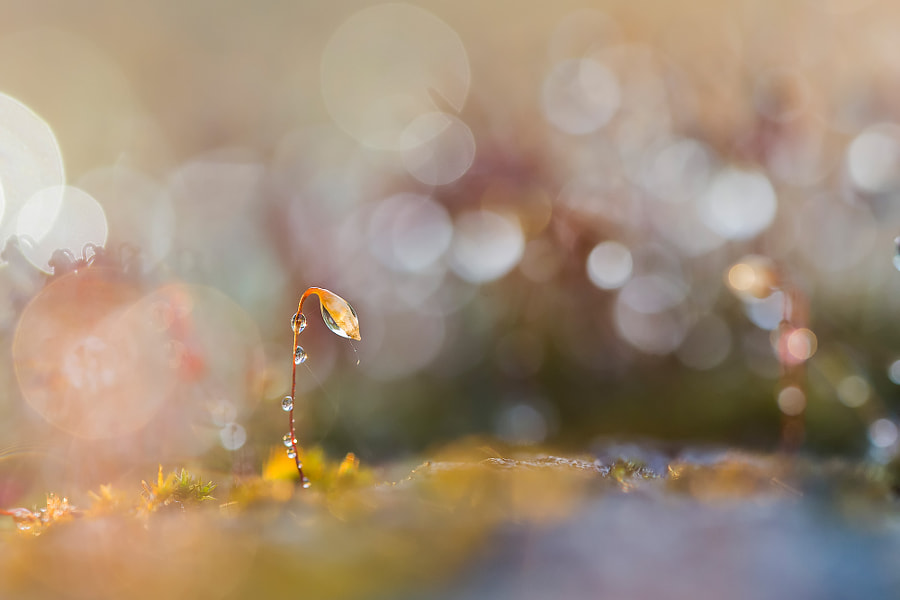 Small world by kriloner on 500px.com