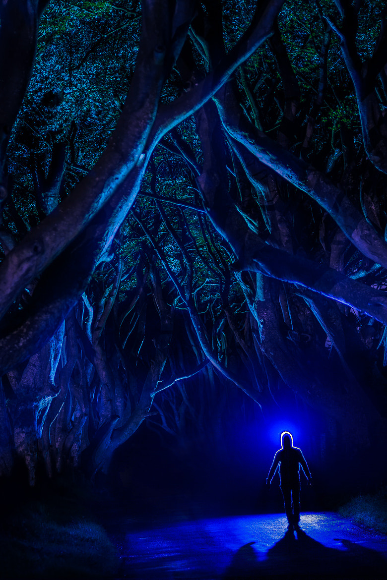 Photograph Les Hombres : The Dark Hedges by Régis Matthey on 500px