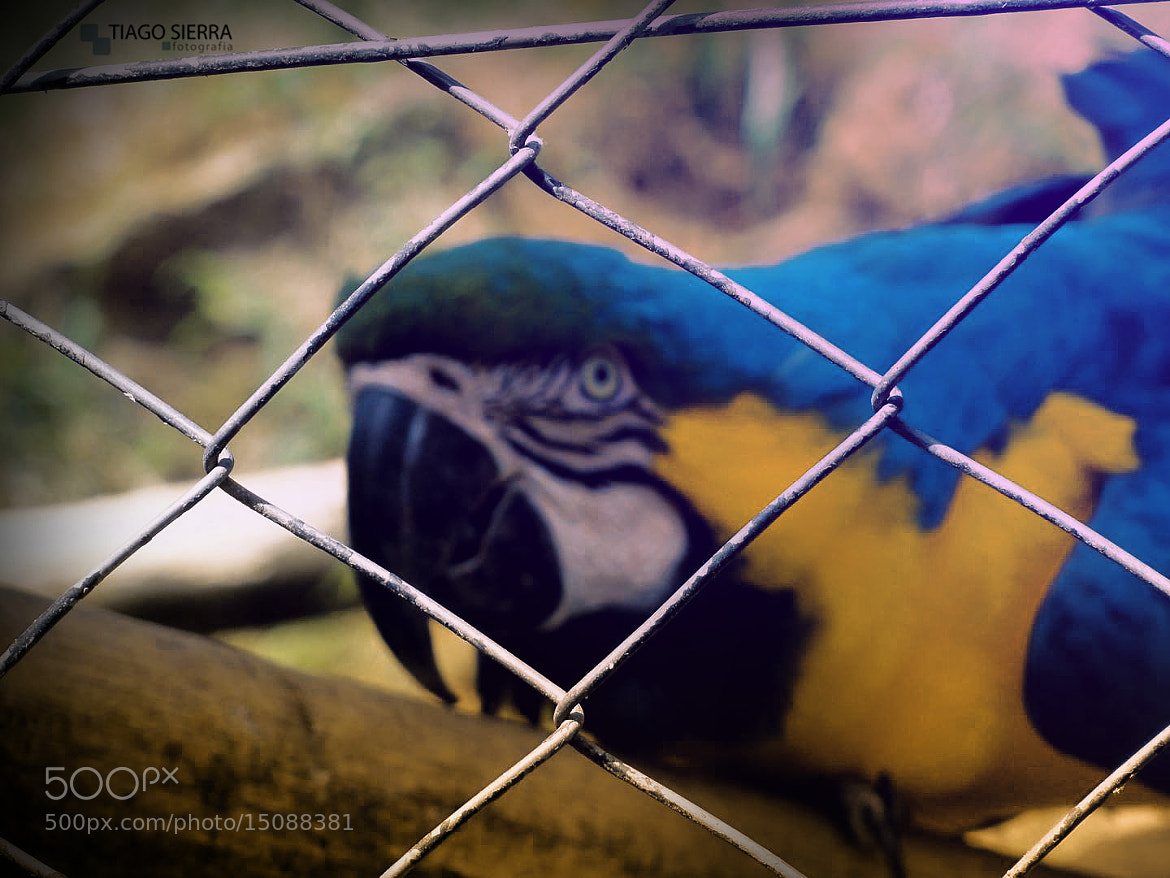 Photograph Arara by Tiago Sierra on 500px