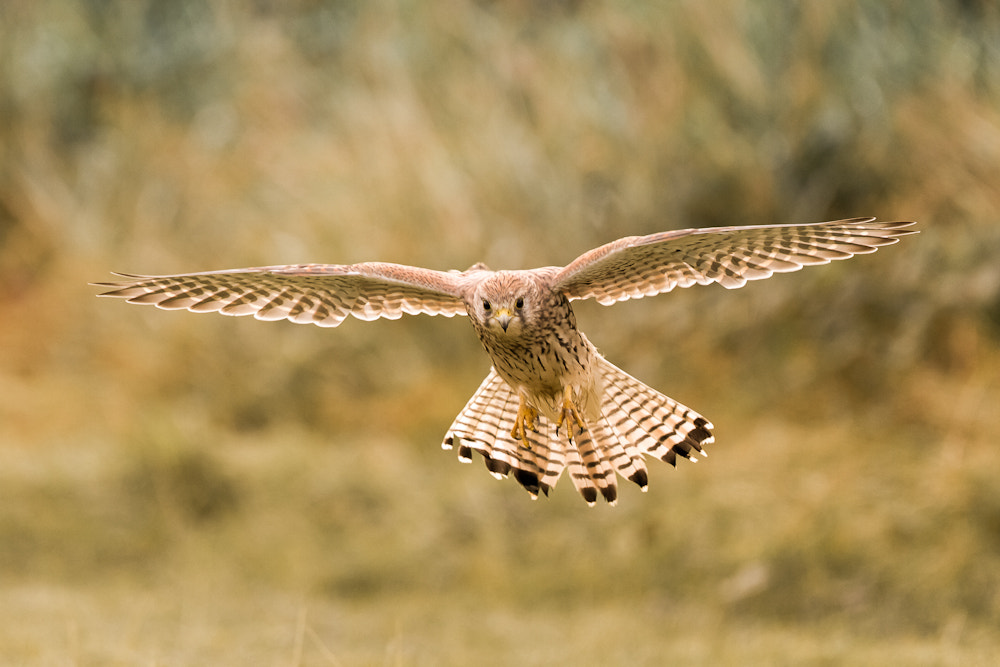 Photograph The Hunt by Mark Medcalf on 500px