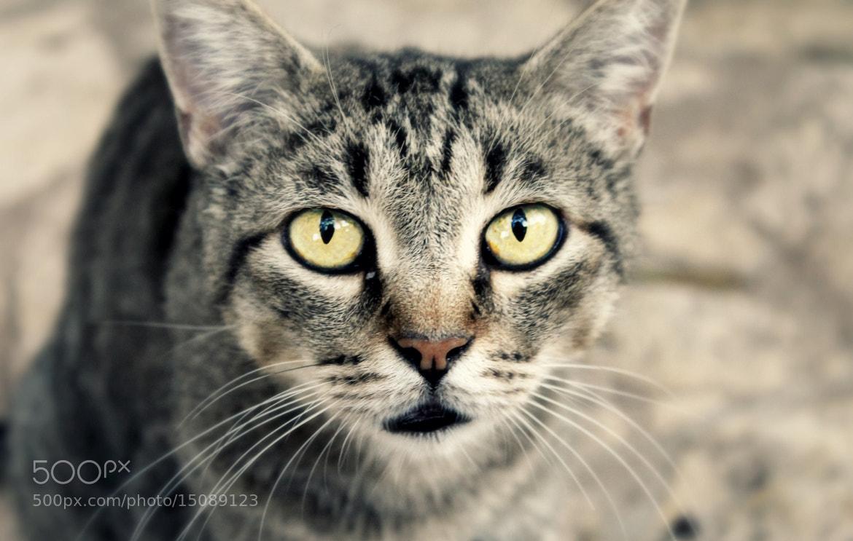 Photograph Cat. by Davide  Carovana on 500px