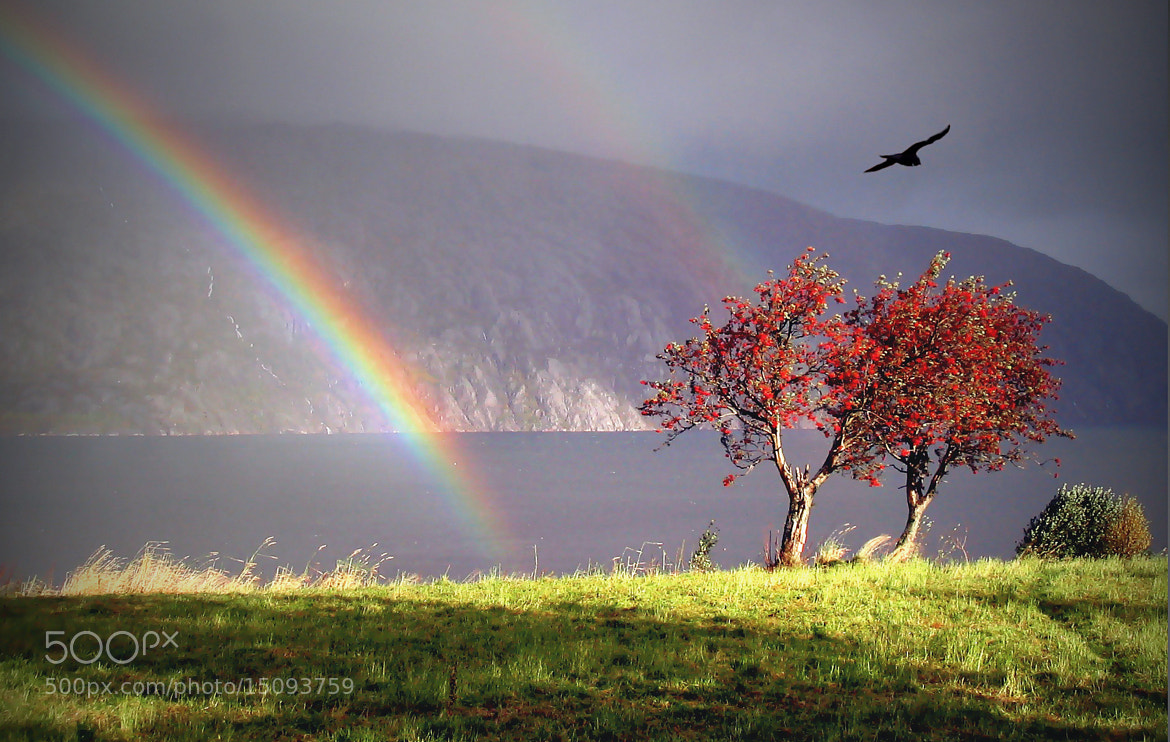 Photograph The Rainbow and Raven. by Kent Lennart Vassdal on 500px