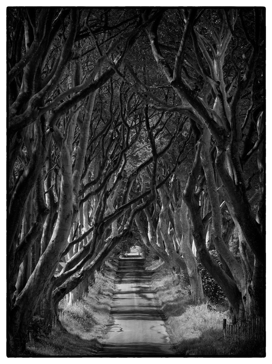 Photograph The Dark Hedges by Paul Lanigan on 500px