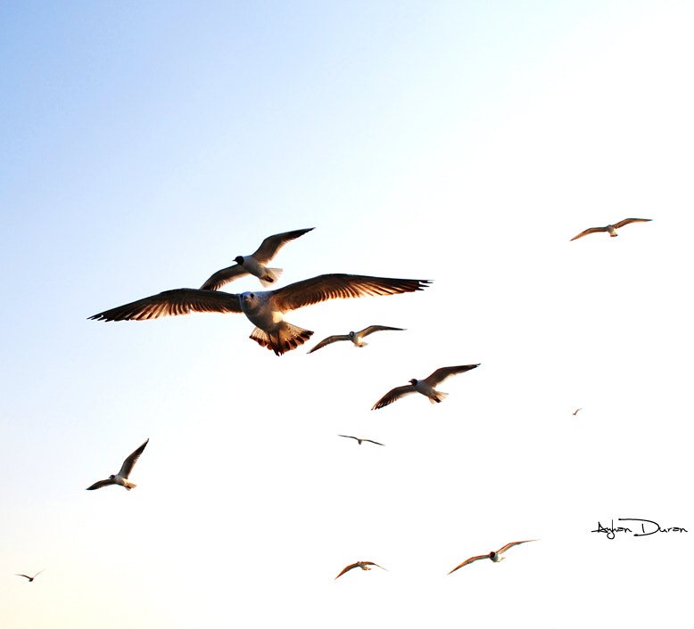 Photograph Istanbul Marmara seagulls by Ayhan Duran on 500px