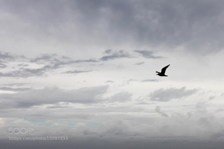 Photograph Freedom by Kawtar AMID on 500px