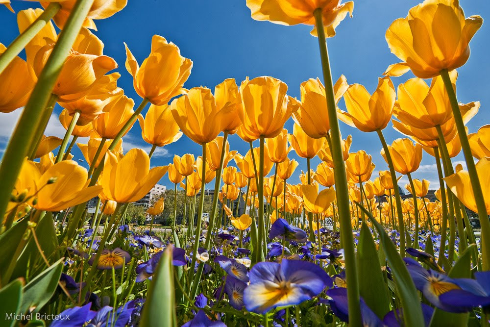Photograph Madrid Spring by Michel Bricteux on 500px
