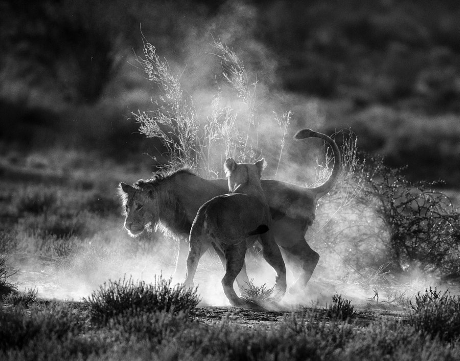 Where dust will fly by Jaco Marx on 500px.com