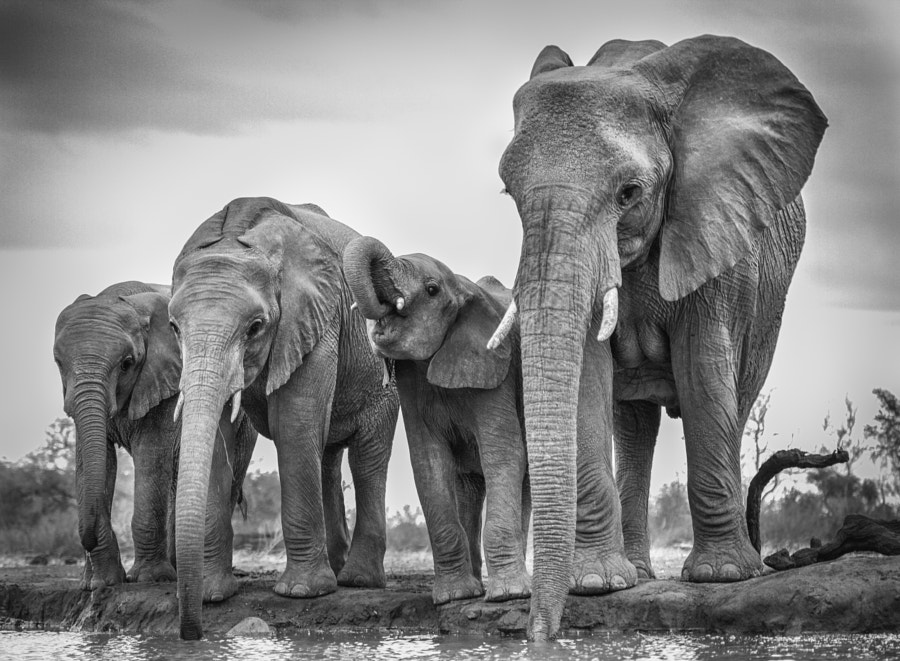 500px blog tips and tricks for black and white wildlife