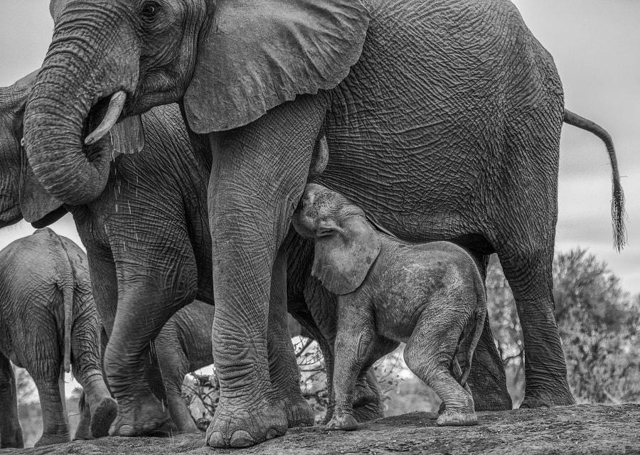 Motherhood by Jaco Marx on 500px.com