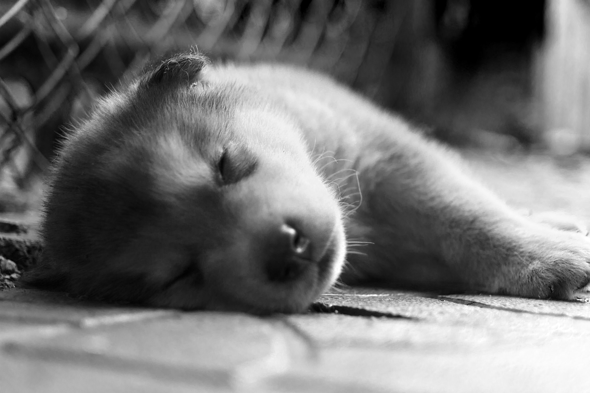 Photograph Sleeping Puppy :) by Eugene Chuev on 500px