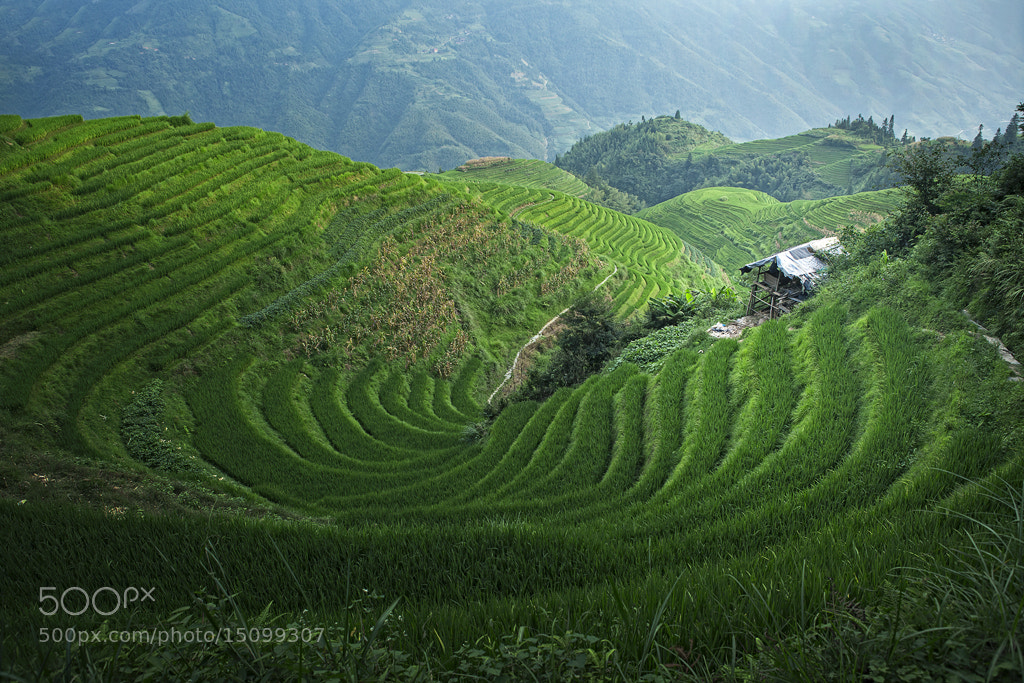 Photograph rice field by Tri Wahyono on 500px