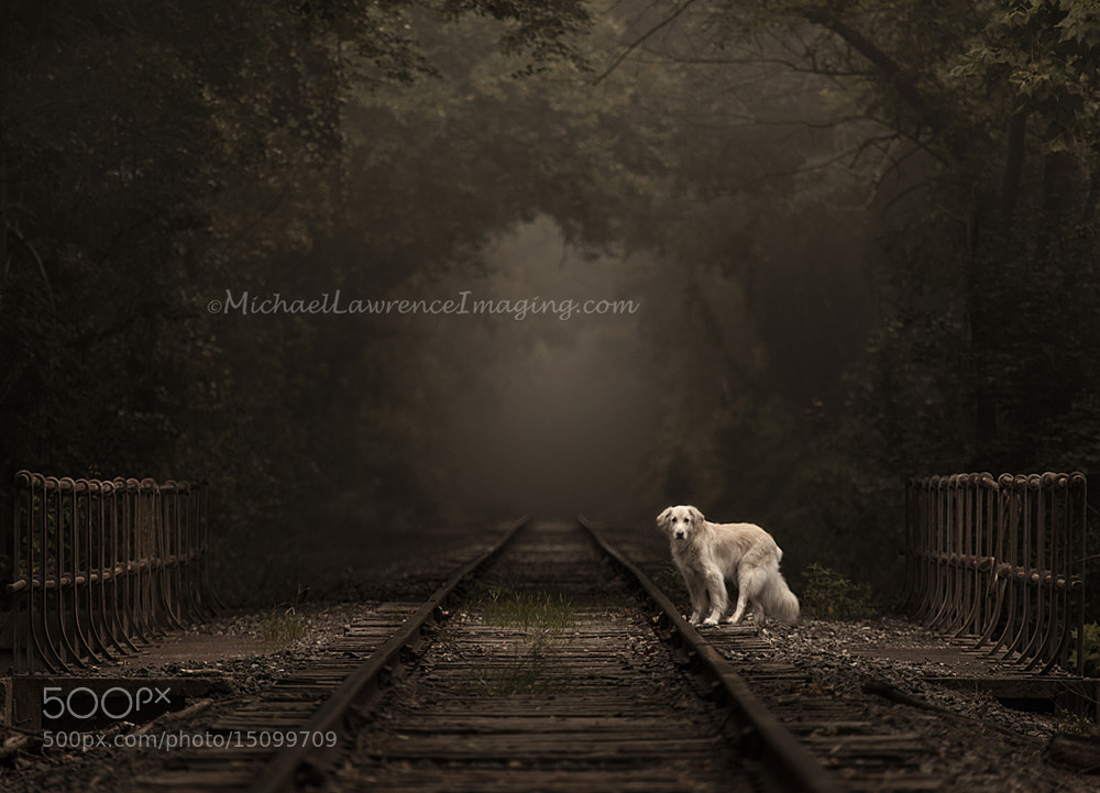 Photograph Sully by Michael Lawrence on 500px