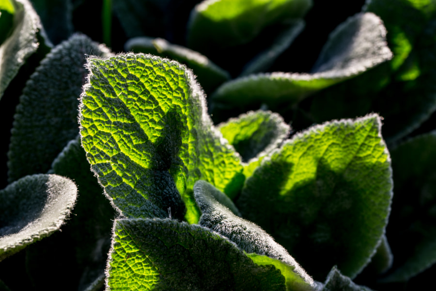 Fuzzy Greens Close Up by John Entwistle on 500px.com