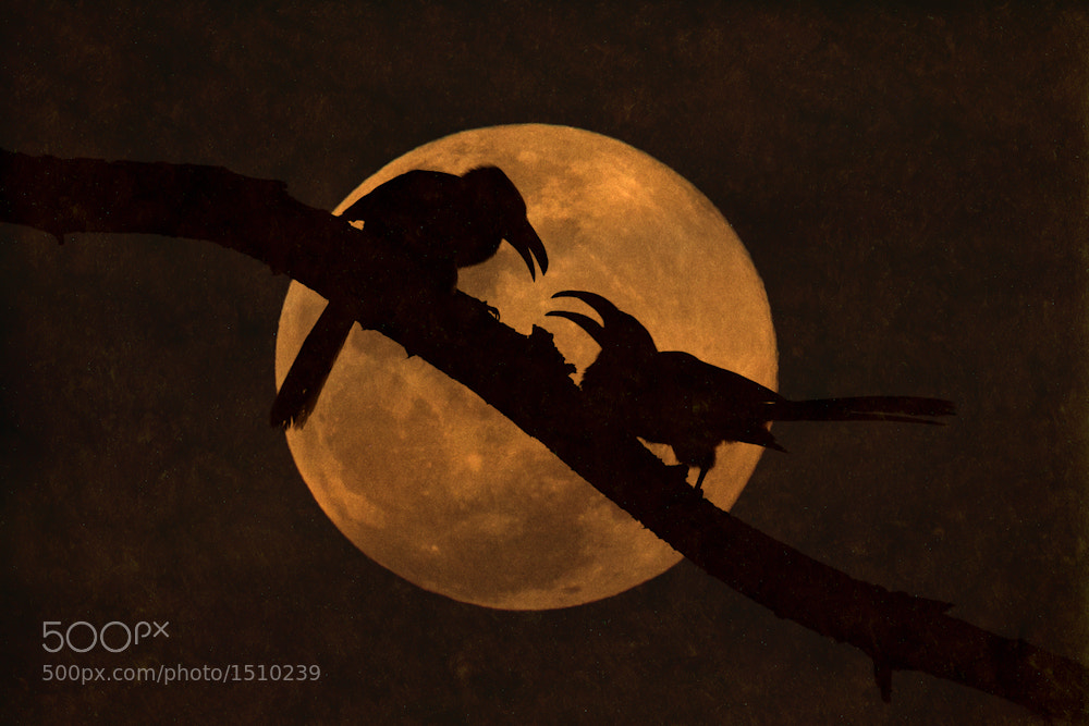 Photograph Moonlight Interaction by Mario Moreno on 500px