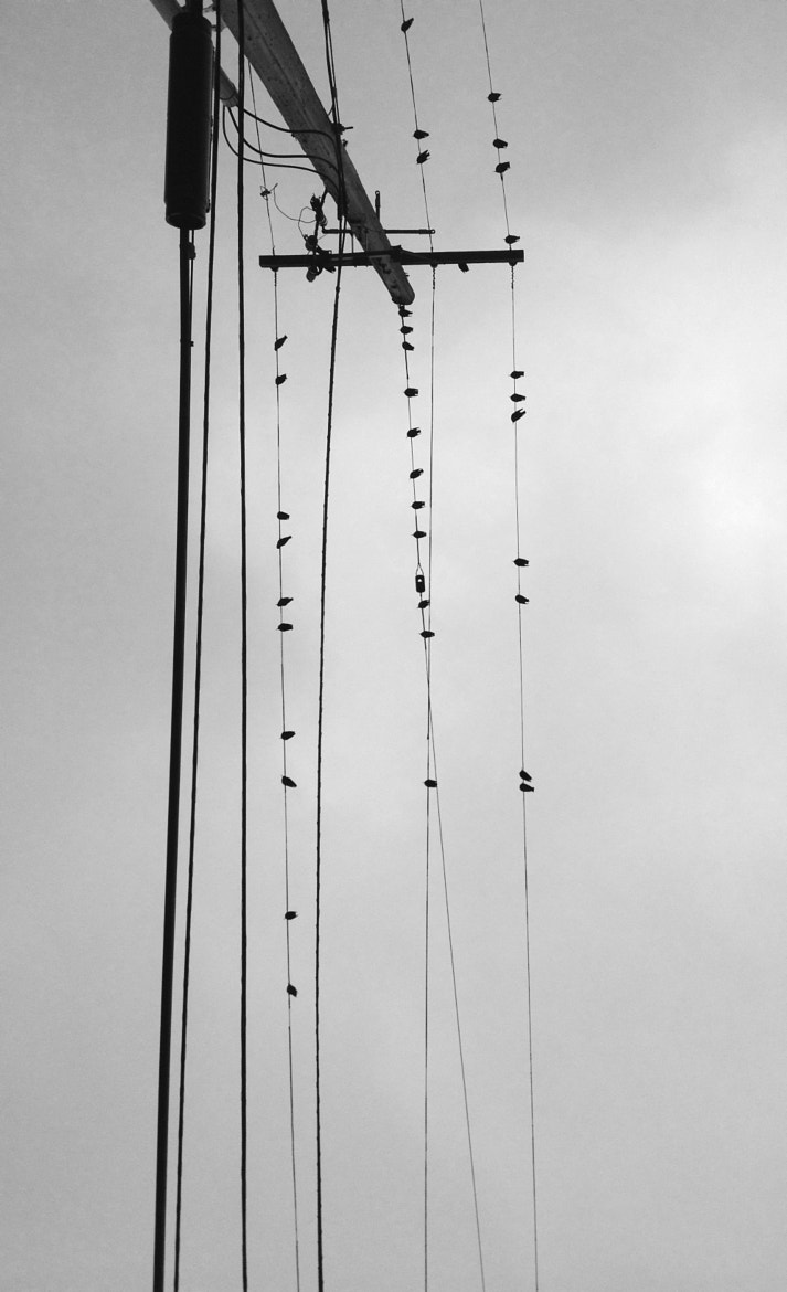 Photograph On the wires by Gema Fernández on 500px
