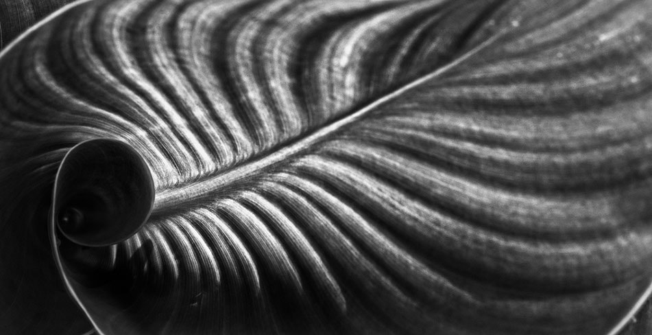 Photograph Leaves line  by 艺锦 林 on 500px