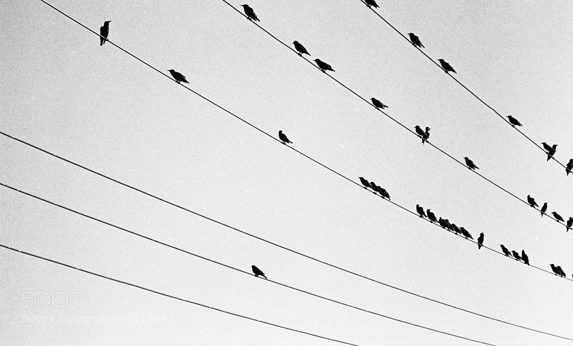 Photograph Bird on a Wire by Kyle Bigart on 500px
