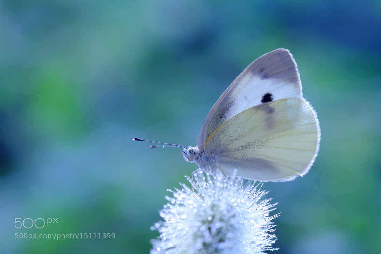 Photograph Cute by Shihya Kowatari on 500px