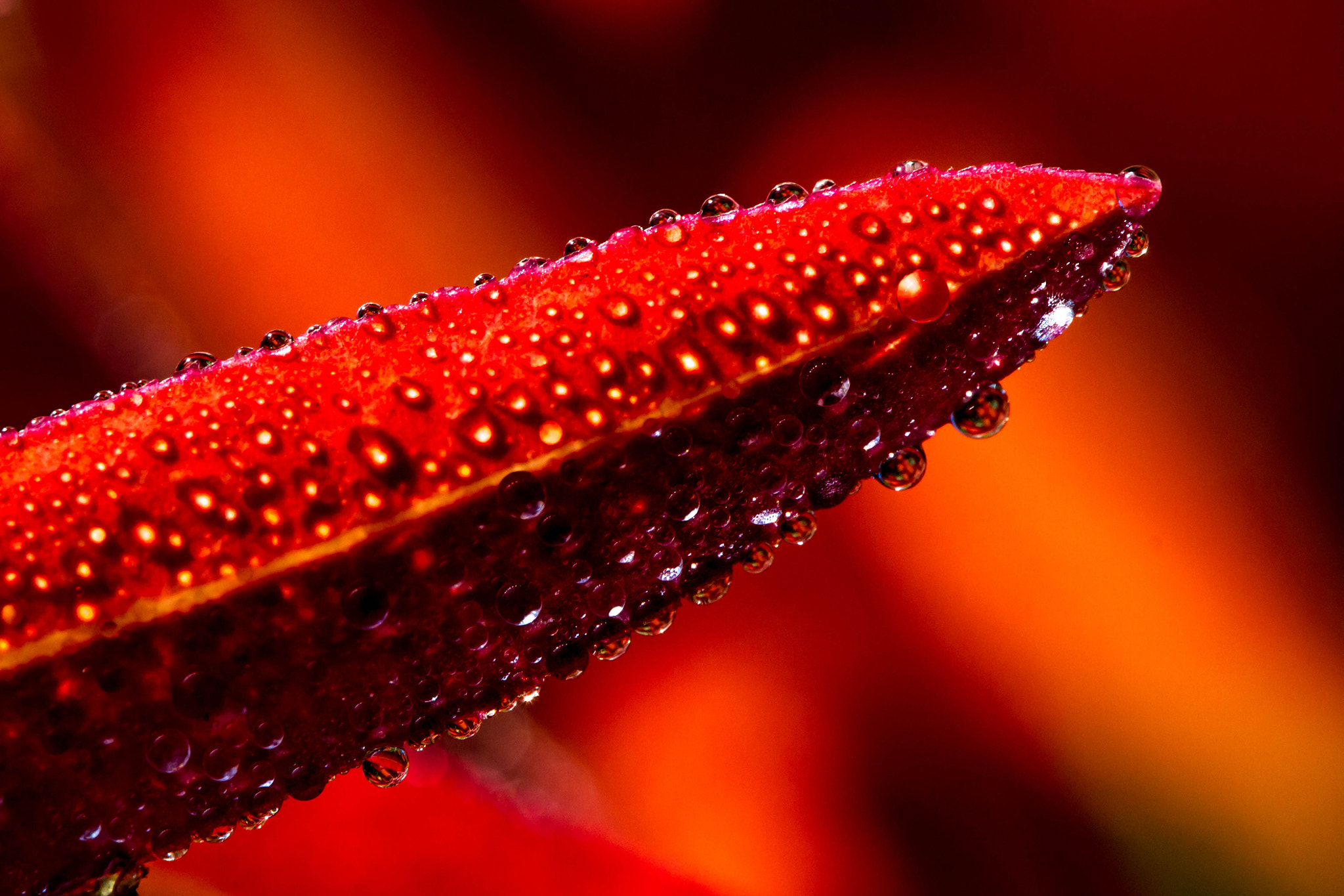 Photograph Drops on fire by Thorsten Scheel on 500px