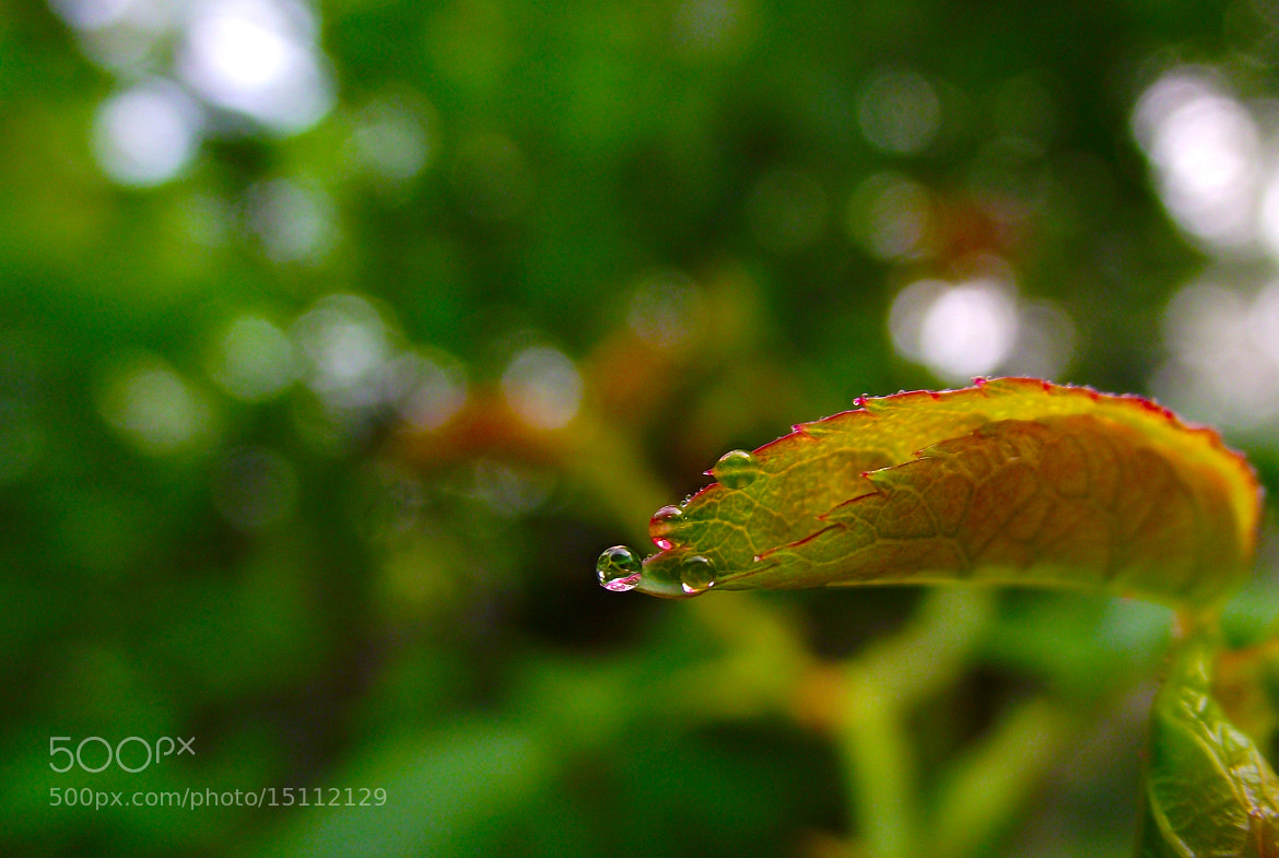 Photograph dew by maneesh p on 500px