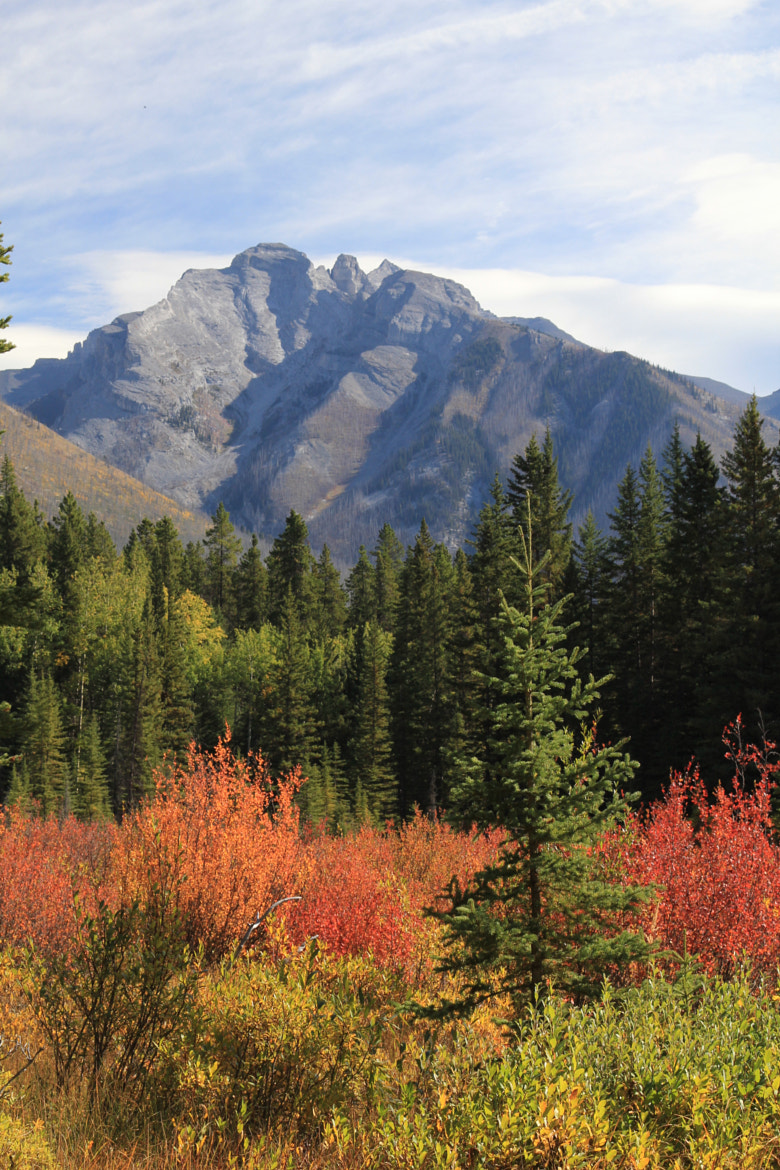 Photograph Fall colors in Banff NP,Alberta by Eva Lechner on 500px