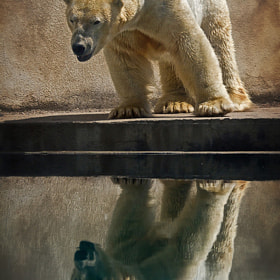 Reflection by László Oláh (olahlaszlo)) on 500px.com