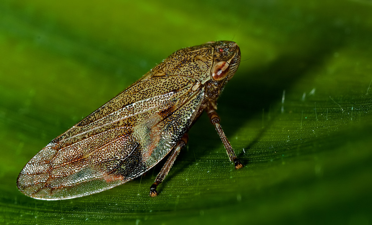 Photograph Leafjumper by Christiaan Slot on 500px