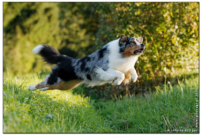 Photograph Spike flying low.. by Johnny Krüger on 500px