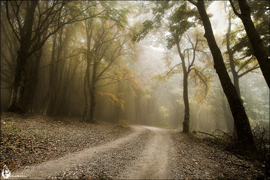Photograph Autunno ...... by Alfonso  Della Corte  on 500px
