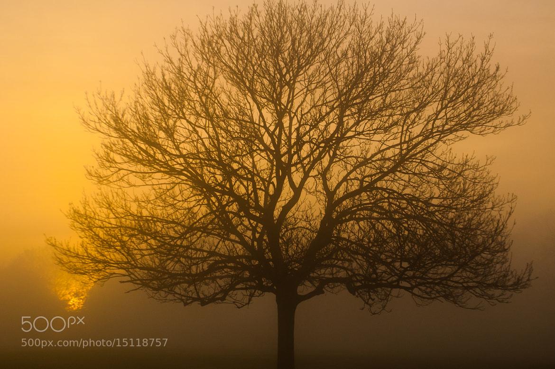 Photograph Golden fog by Kenan Malik on 500px