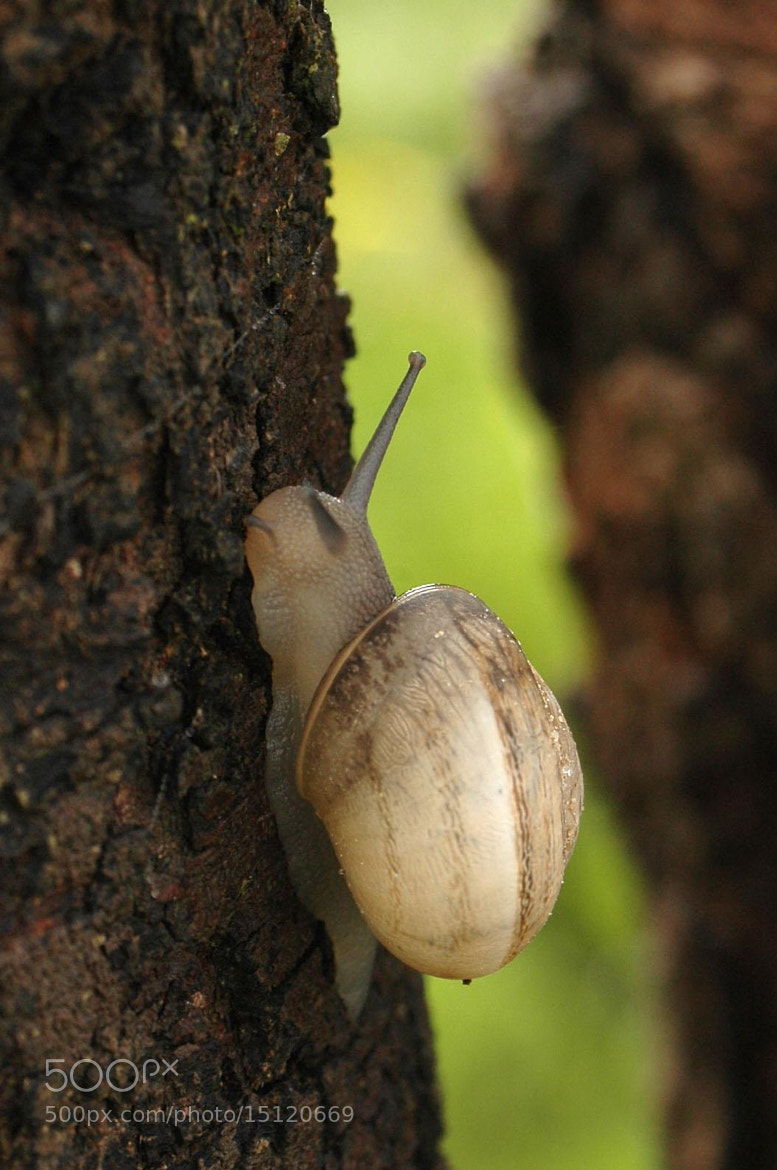 Photograph Snail - Utina by Wafa Sebri on 500px