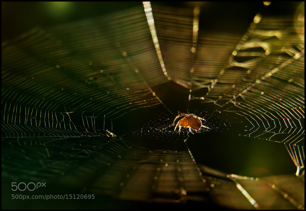 Photograph Gravity by EMERALD WAKE © on 500px