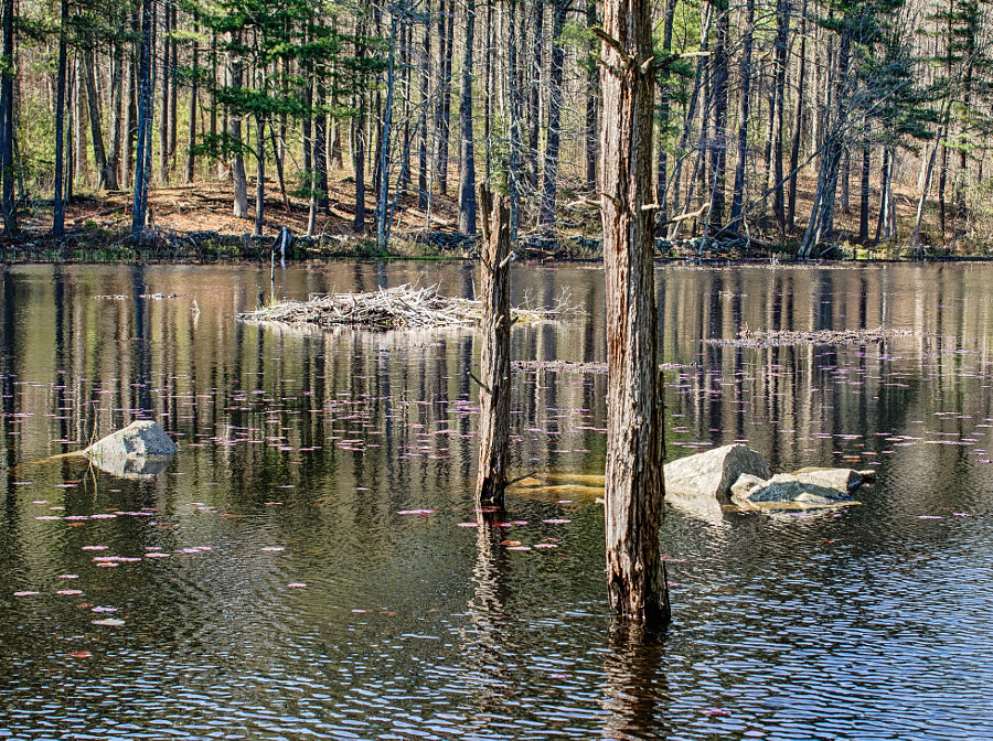 Beaver Brook Pond Hike by John Poltrack on 500px.com