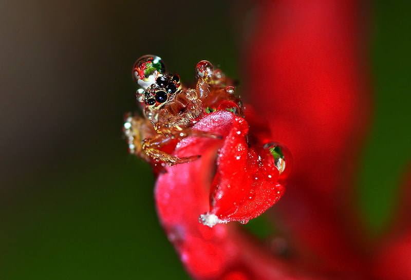 Photograph ..(oO^Oo)..Jumper by Bu Balus on 500px