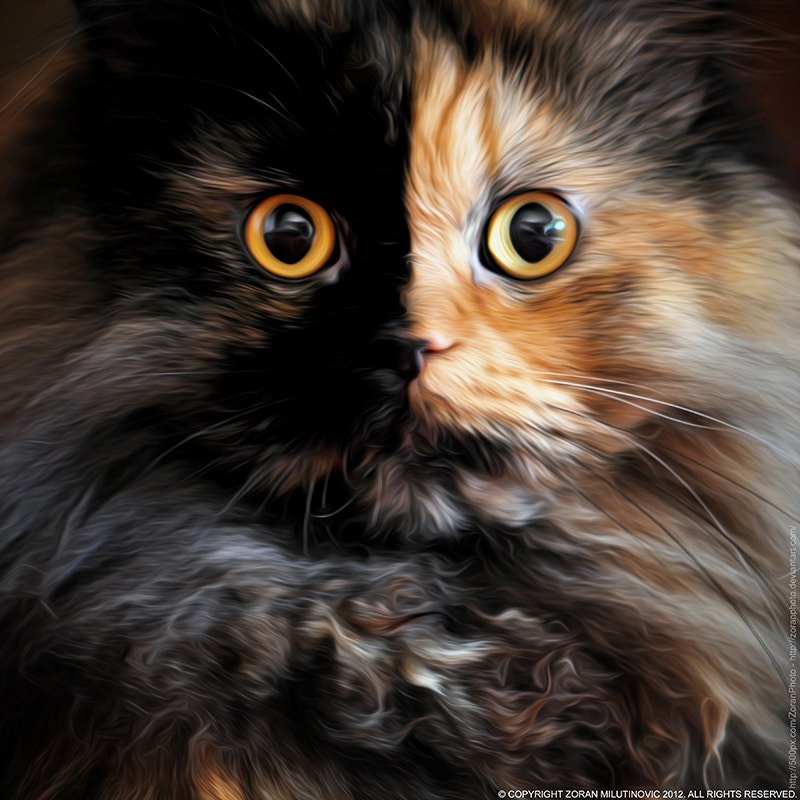 Photograph Two Face by Zoran Milutinovic on 500px