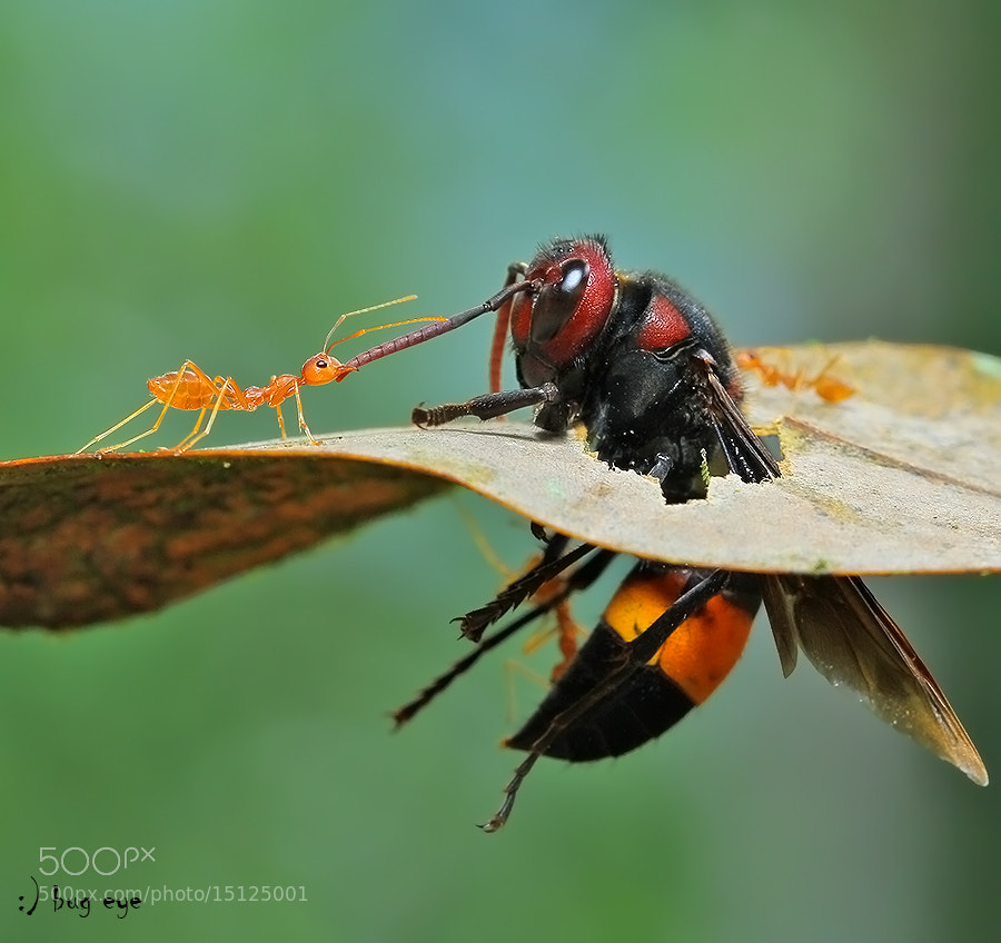 Come with me ! by bug eye :) on 500px.com