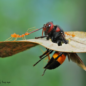 Come with me ! by bug eye :) (bug_eye)) on 500px.com