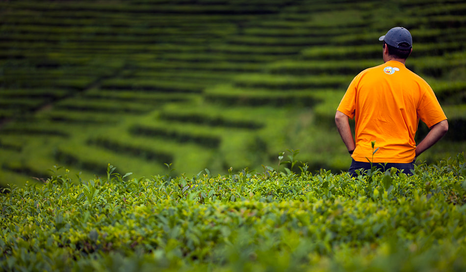 Photograph Fields of tea by Jorge  Feteira on 500px