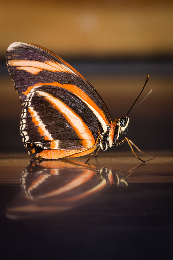 butterfly by Jan Naessens / 500px | @500px