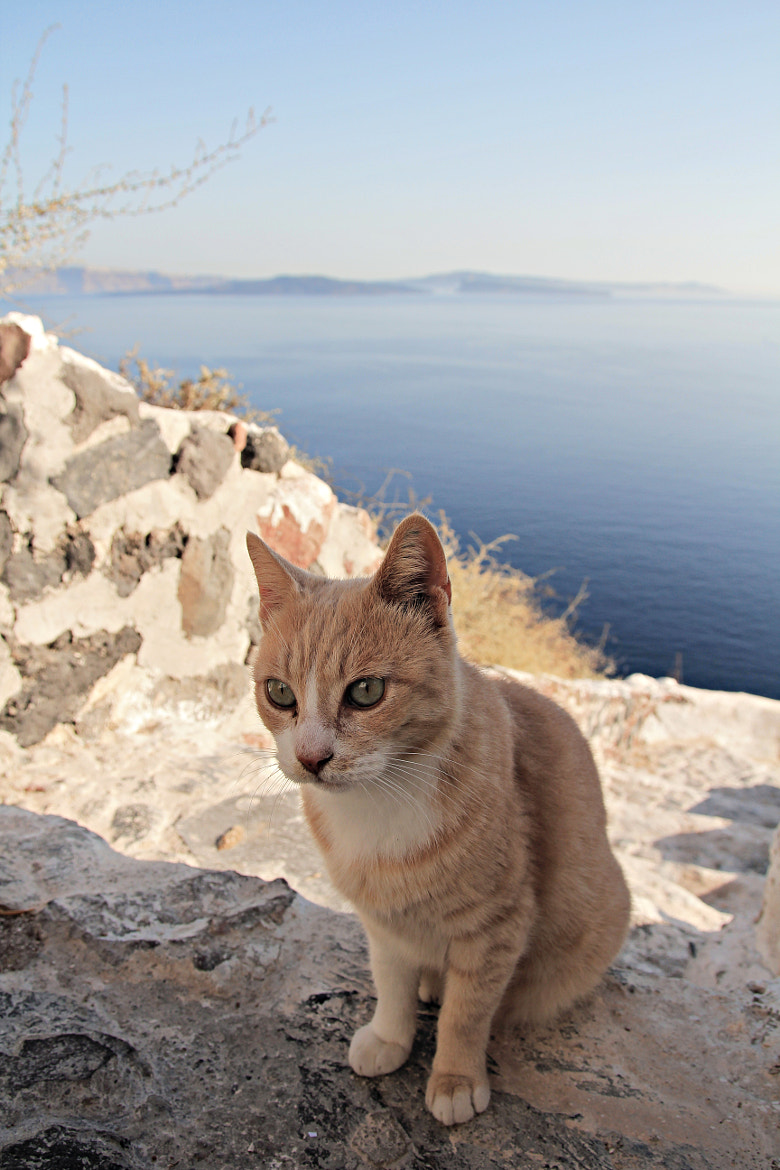 Photograph Greek cat by Boris Chou on 500px