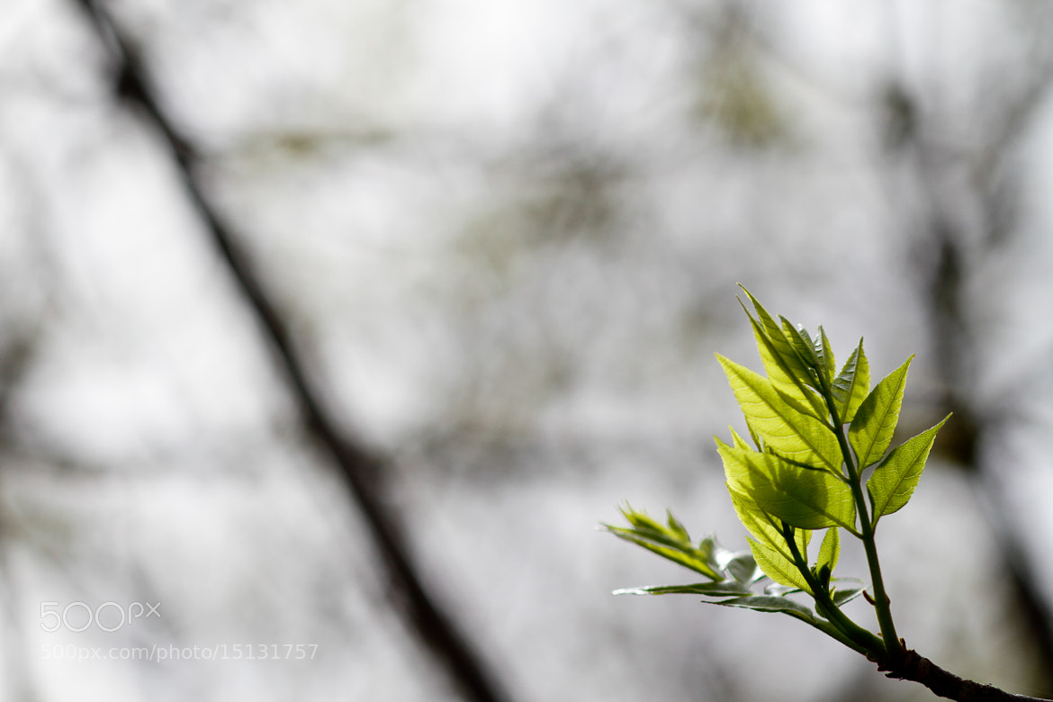 Photograph Green by Deepal  on 500px