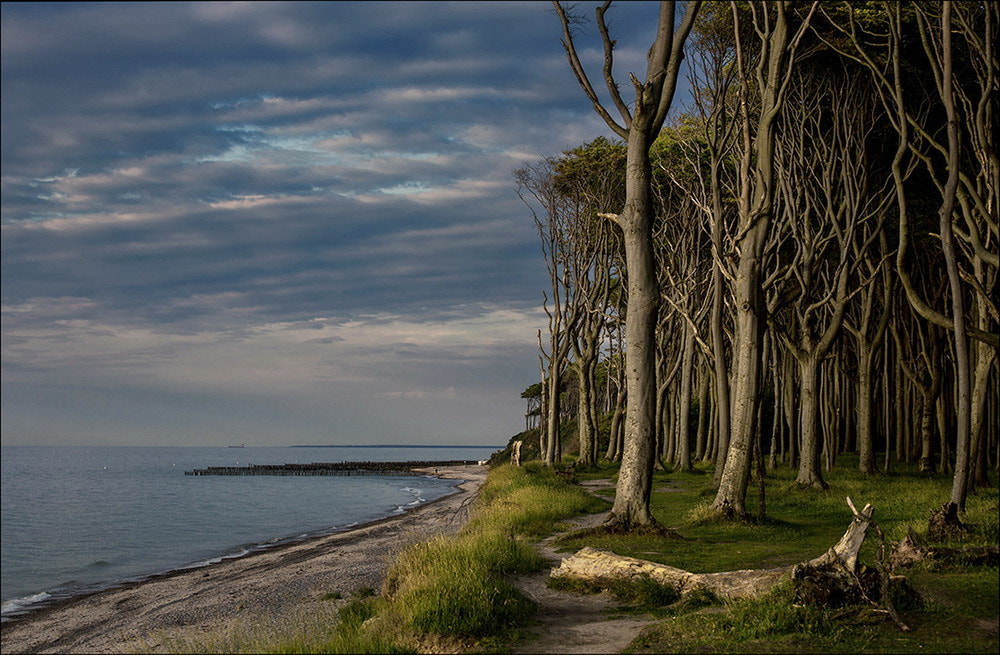Photograph the Ghost forest by Birgit Pittelkow on 500px