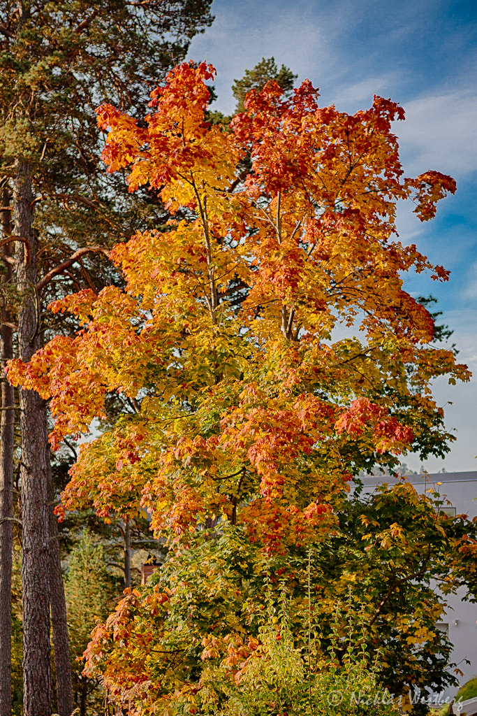 Photograph Colors of autumn by Nicklas Westberg on 500px