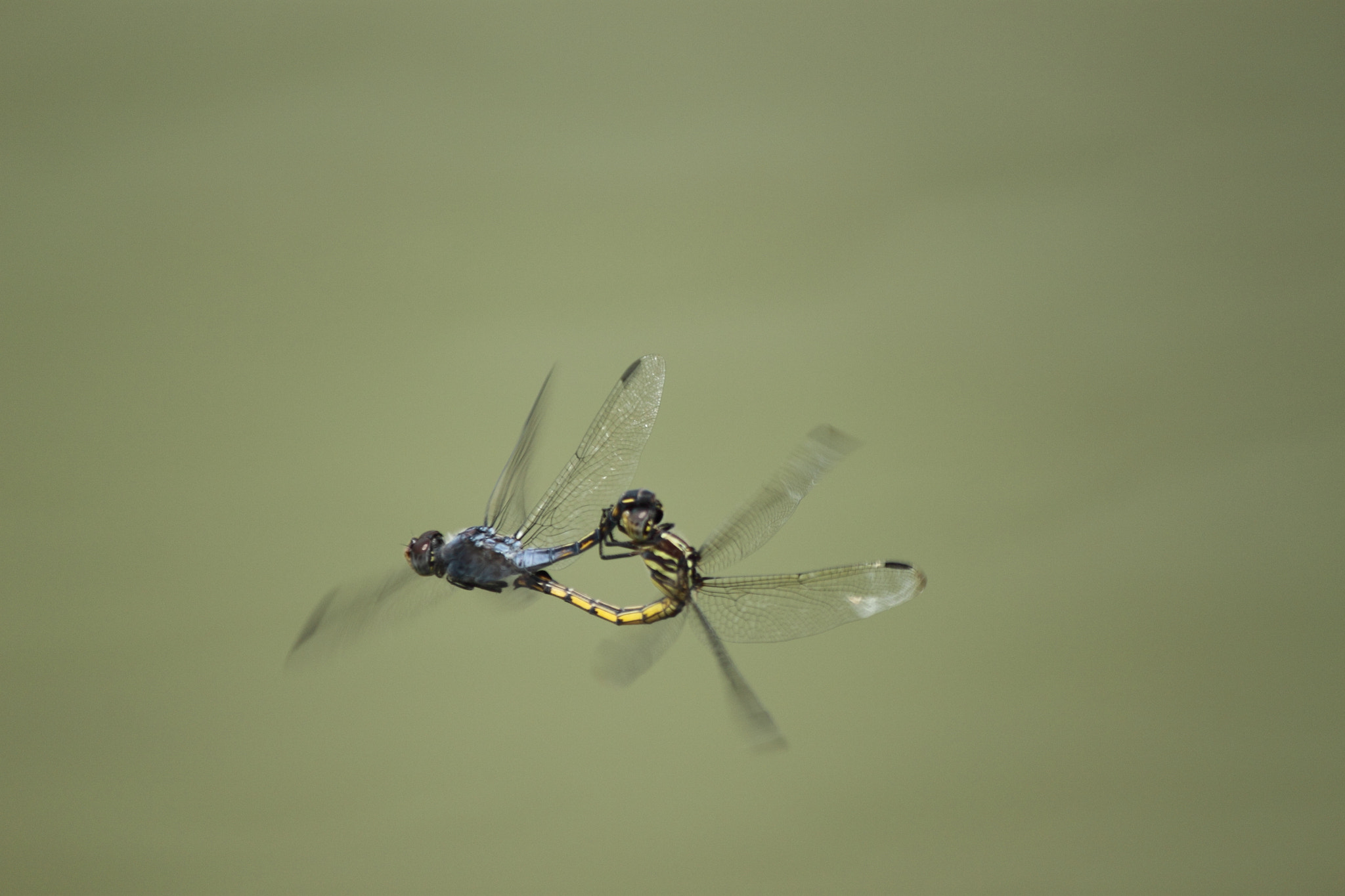 Photograph Dragon Flies by udhay krishnamurthy on 500px