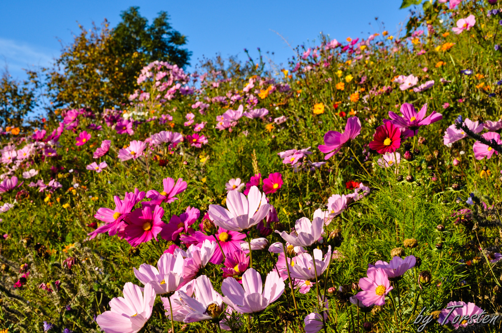 Photograph Sea of Flowers by Torsten Trunz on 500px